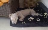 arnold-hund1-e1452858179998